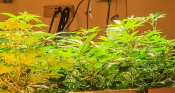 """What Does It Mean to Have the""""Best LED Grow Lights?"""""""