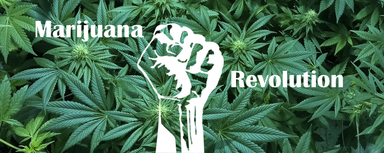 Marijuana Revolution: A Peek Inside the Cannabis Industry Labyrinth
