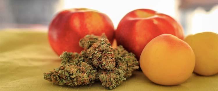 cannabis as appetite stimulant