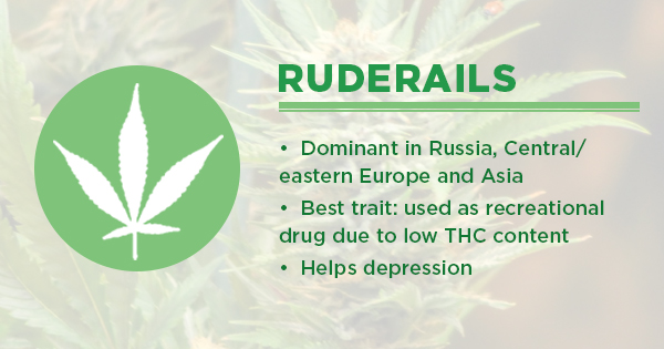Ruderalis: Landrace Cannabis