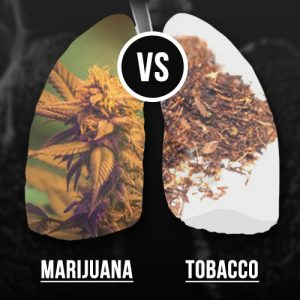 smoking weed vs tobacco