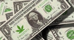 Business Trend Alert: Getting Into the Cannabis Business