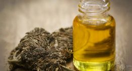 What to Find out More about Marijuana Terpenes ?