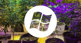 Microsoft Joined The Cannabis GAME