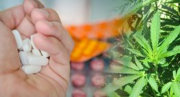People are Switching Prescribed Drugs for Medical Marijuana
