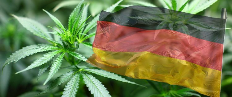 cannabis in germany- australia to legalize medical use in november