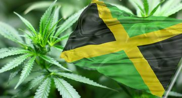 Cannabis In Jamaica Today
