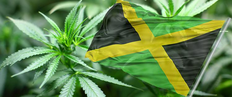 Ganja in Jamaica: A Medical Anthropological Study of Chronic Marijuana Use – 1975