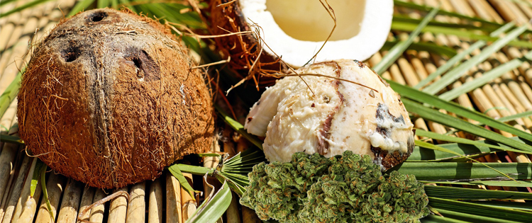 Cannabis Coconut Oil: One of Nature's Best Combination