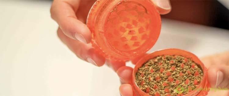 marijuana kief