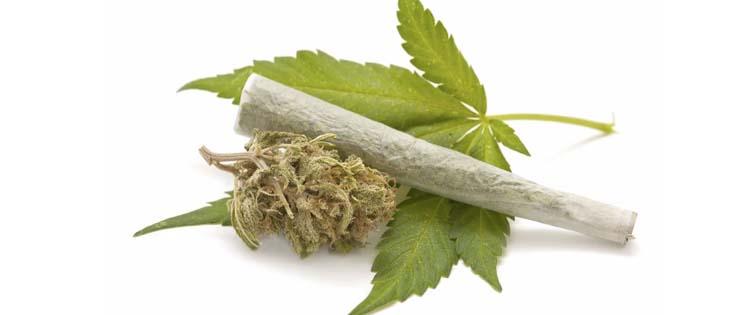 marijuana kief-quit pot
