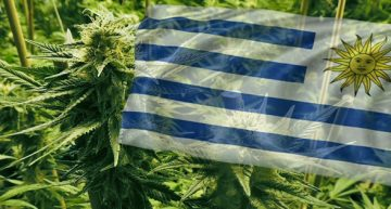 4000 New Registrations Added to Uruguay's Cannabis Distribution System