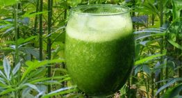 Enjoy A Refreshing Glass Of Cannabis Juice