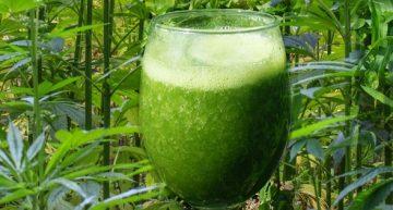 Enjoy A Refreshing Glass Of Cannabis Juice