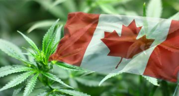 Politics in Canada Delays Marijuana Legalization Plan