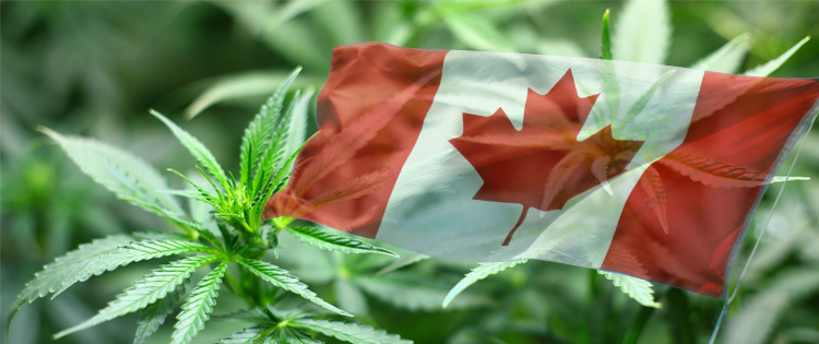 Canadian flag with cannabis
