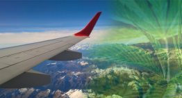 How To Get Marijuana While Traveling Abroad – Don't Be Embarrassed To Ask