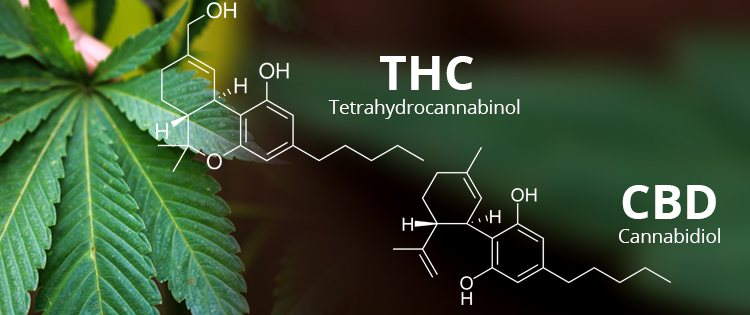 The Difference Between Using THC and CBD