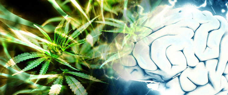 endocannabinoid system - CBD and mental health