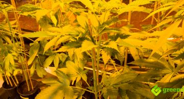 Indoor vs. Outdoor Marijuana Growing | Pros and Cons
