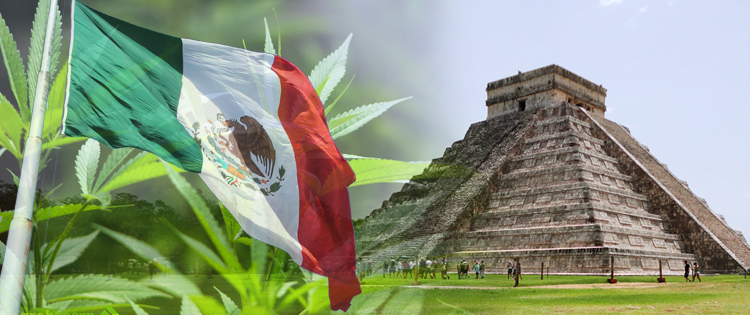 The Progress of Cannabis In Mexico: Reform South of The Border