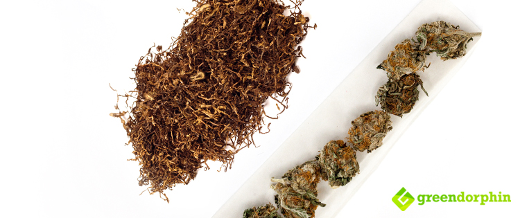 Why You Should Stop Mixing Your Cannabis with Tobacco