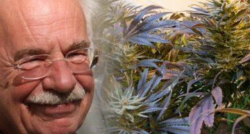 Dr Peace – A German Cannabis Doctor On The Go