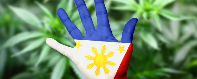 Philippine Marijuana Story