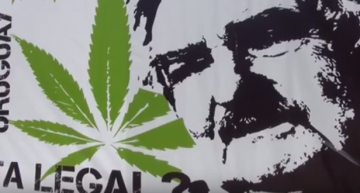Greendorphin World News Episode #6 – Uruguay Cannabis News Featuring Juan Vaz