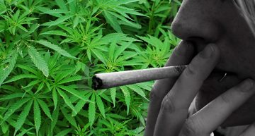 The Decline of Cannabis Counterculture