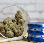 cannabis enthusiasts