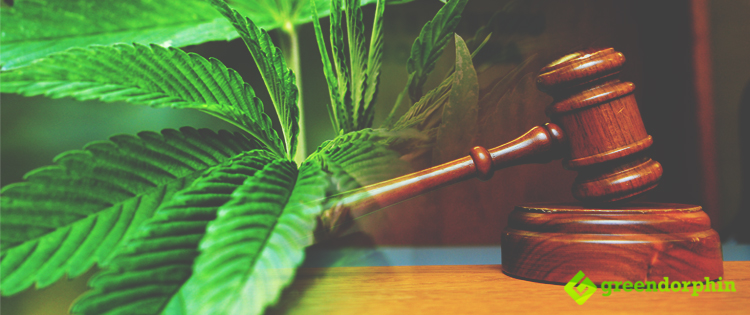 Judge Approves to Legally Grow Marijuana in Florida