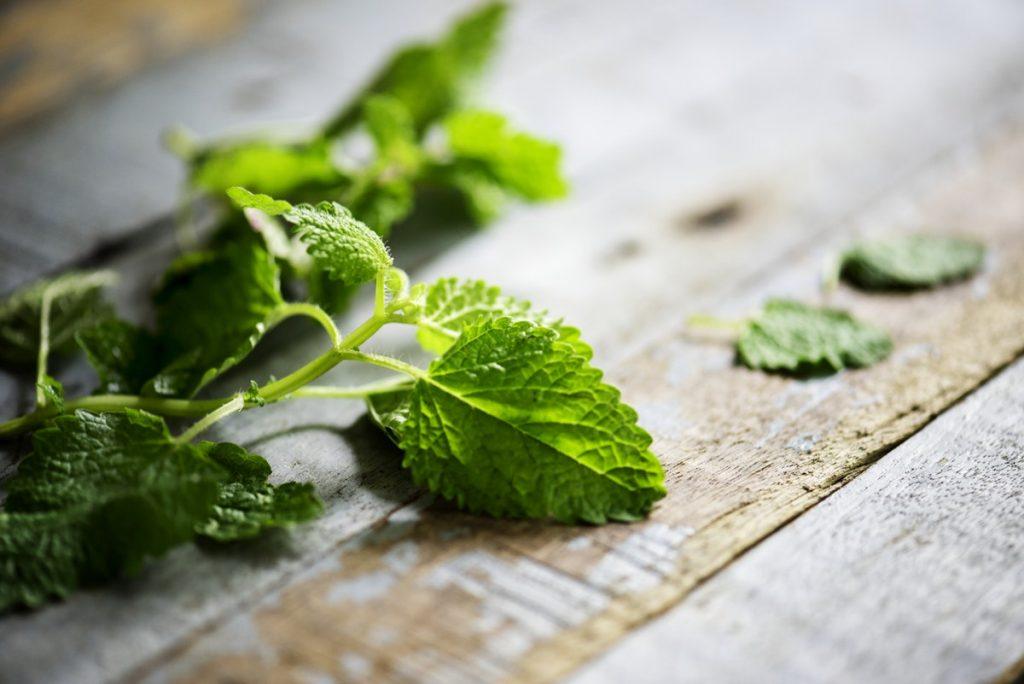 Best Herbs to Vaporize