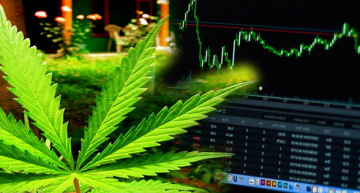 Here is How Cannapreneurs are Shifting from The Black Market to The Stock Market