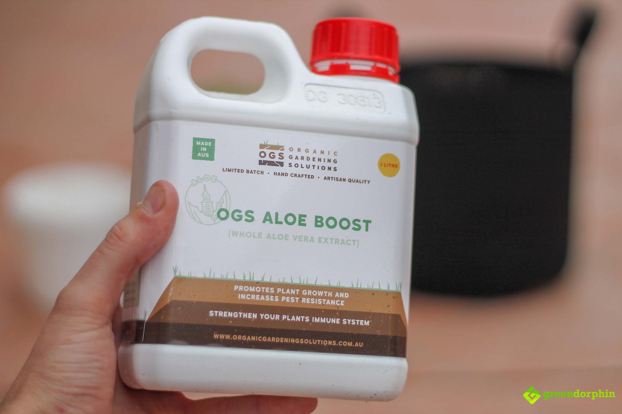 Repot Your Cannabis Plants OGS aloe
