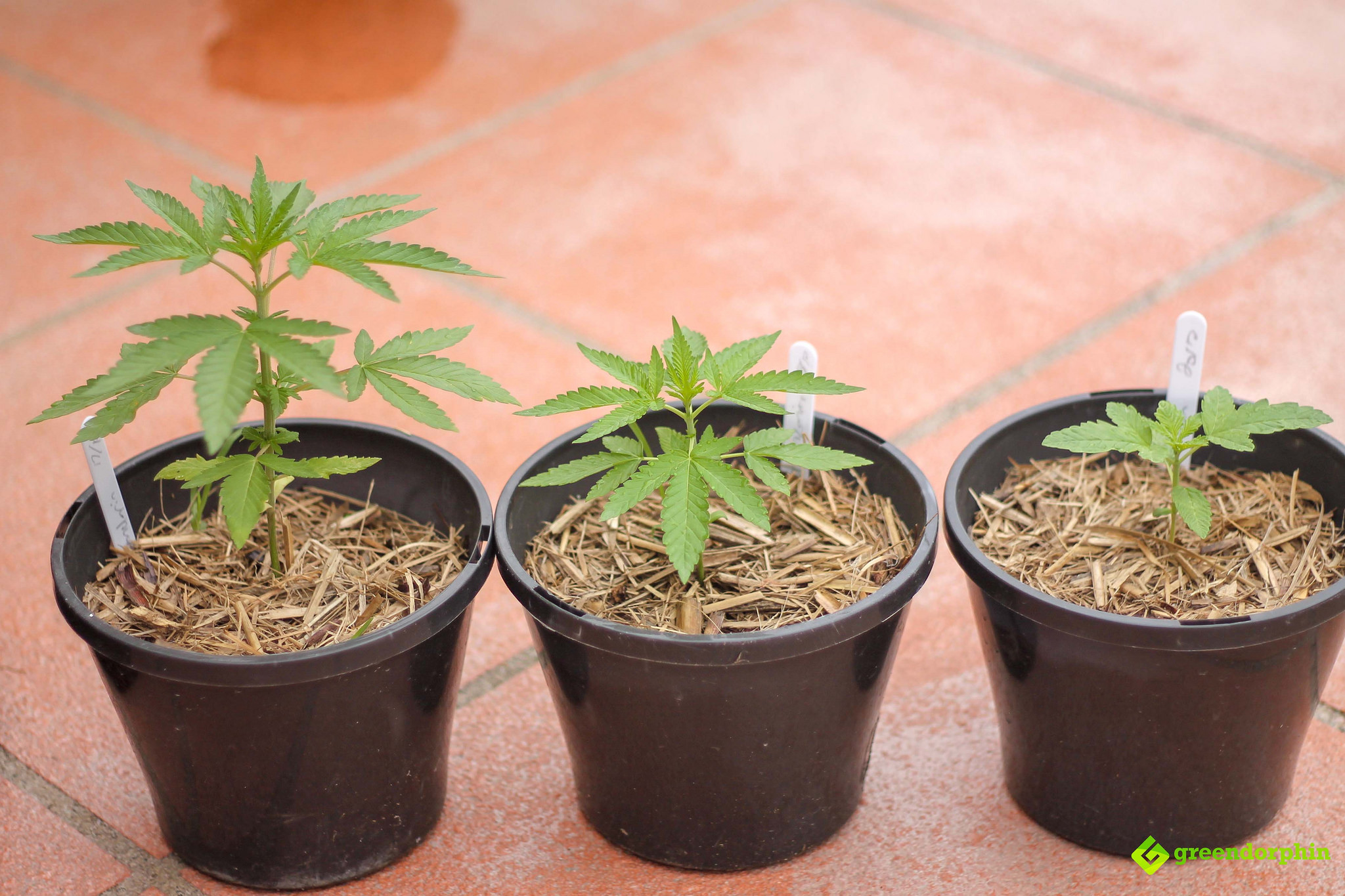 Repot Your Cannabis Plants choose your weapon