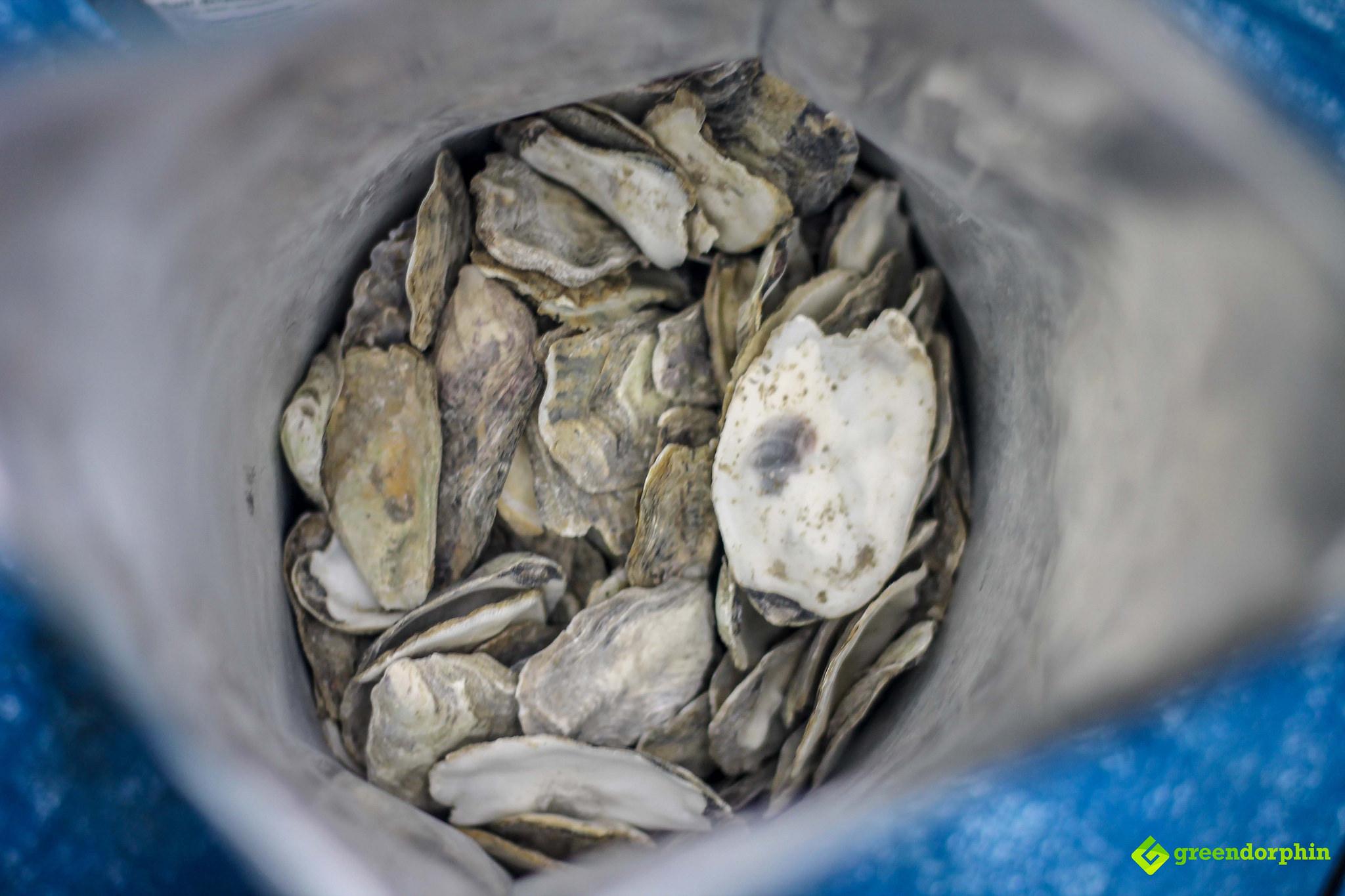 No-Till Soil oyster shells