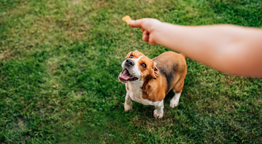 CBD Oil Dog Treats