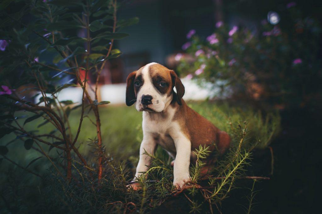 Cute sad-looking puppy
