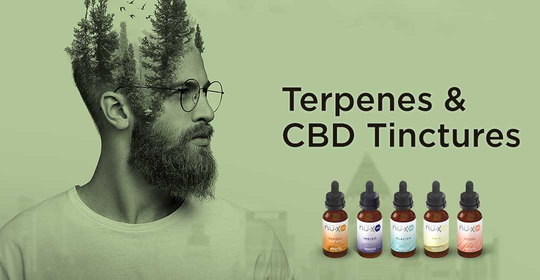 Terpenes and Tinctures – What's the Connection?